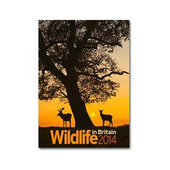 Wildlife in Britain Calendar